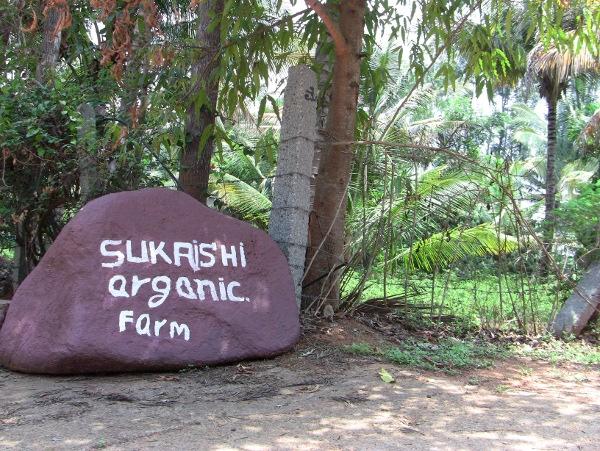 Sukrushi Farm4