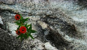 rock_hard_-flower_power-2