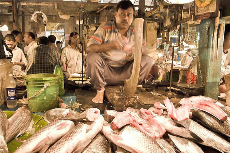 Ilish fish