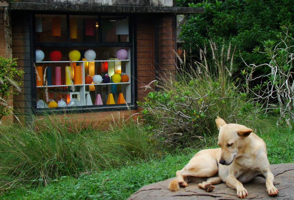 Auroville-craft-dog