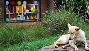 Auroville-craft-dog-2
