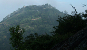 Wild-Elephant-at-BR Hills-2
