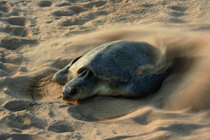 sea_turtle_egg
