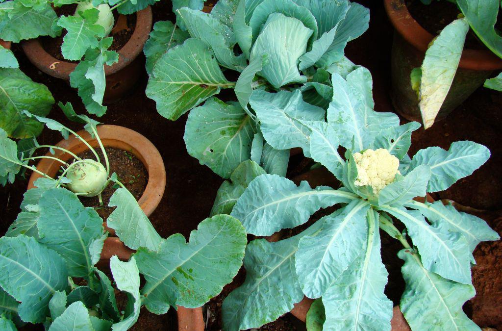 Guide to Organic-Kitchen-Garden