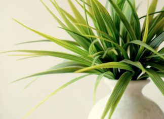 Best indoor plants in India