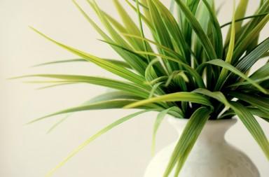 Best indoor plants in India