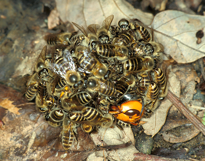 Animal Inspirations - Honey Bee heat ball