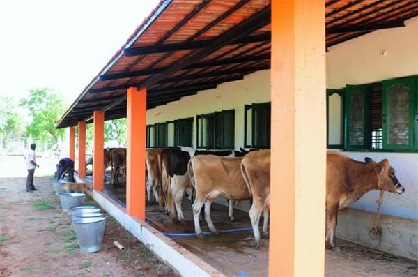 oxygen acres organic milk dairy