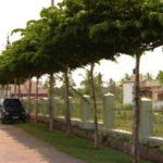 Eco-friendly Ideas - Natural green canopy