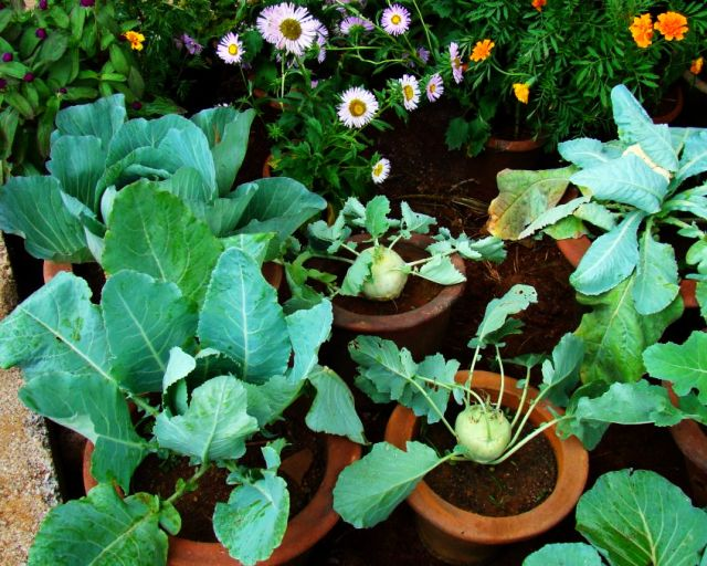 Kitchen Garden - Flowering plants and vegetables