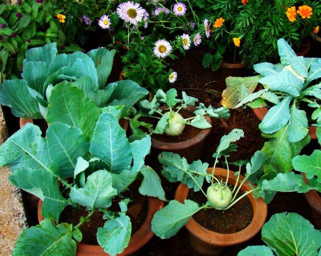Kitchen Garden - Flowering plants and vegetables
