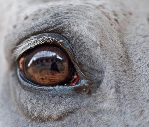 hourse-eye