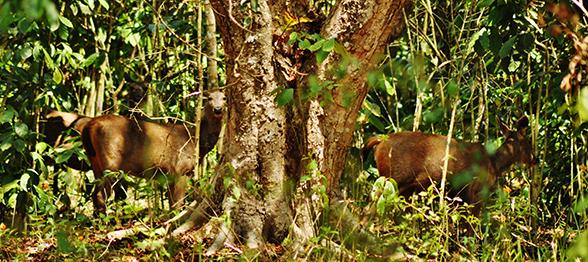 wildlife-documentary-deers