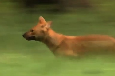 The Pack wild dogs documentary