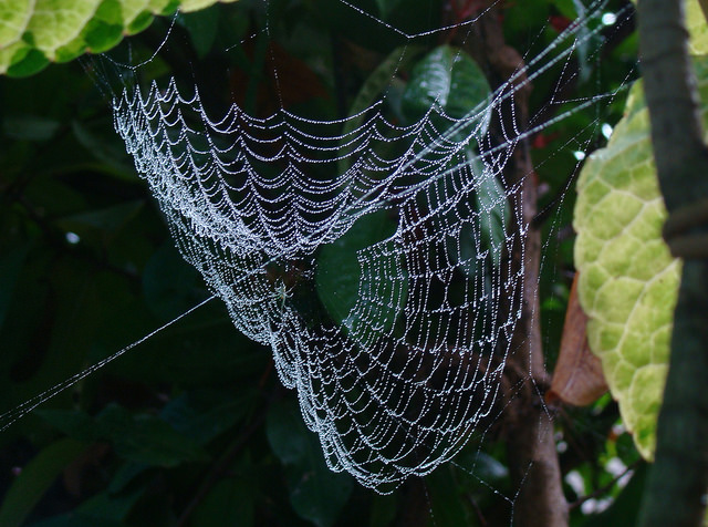 Rain Pictures - Web dew drop