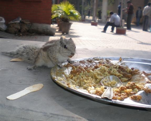 Delhi University Campus Food