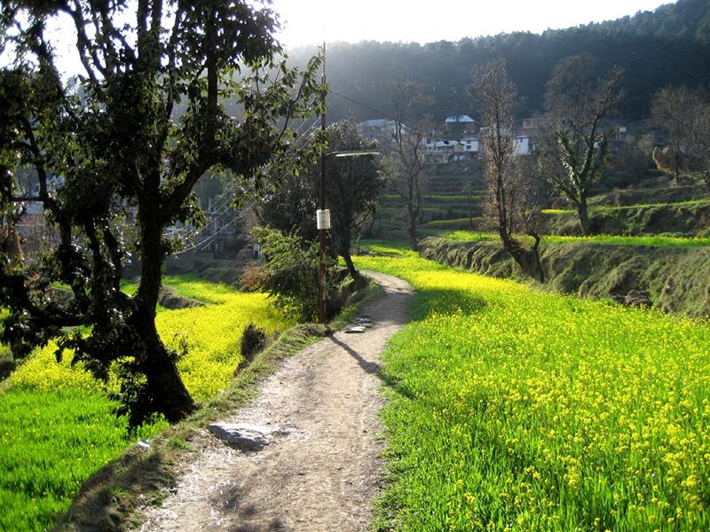 Himachal Pradesh - Dharamkot