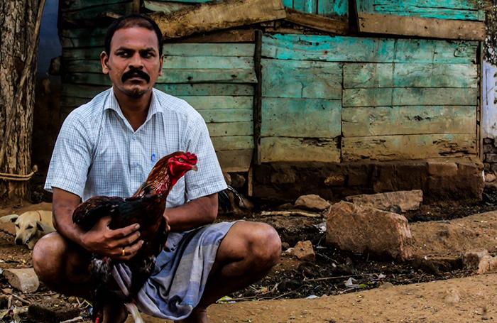 cock fight Tamilnadu