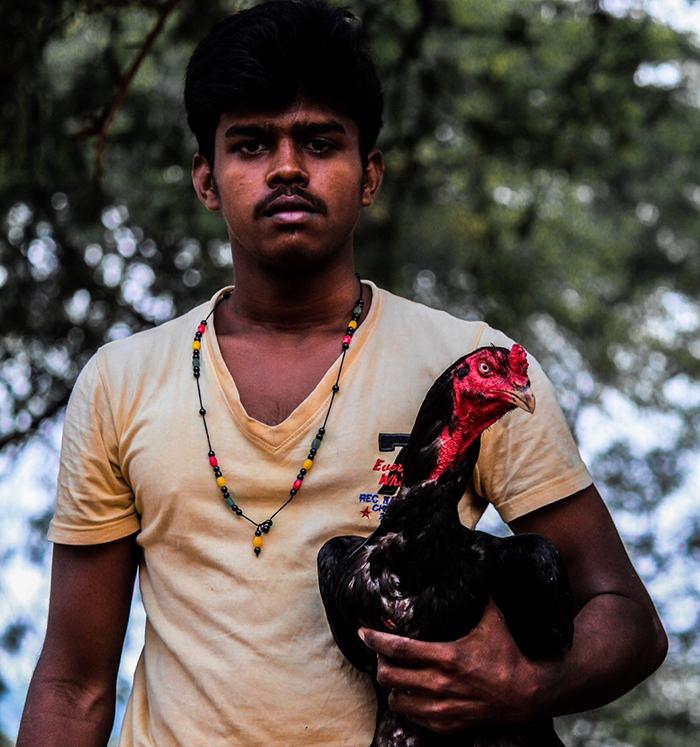 aseel tamilnadu