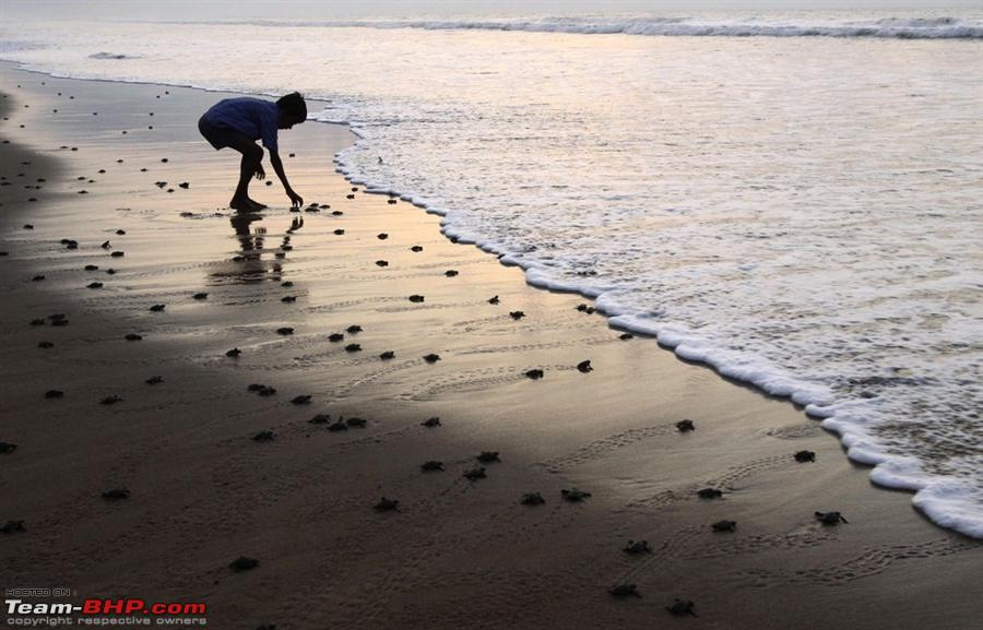 Velas-Turtle-Festival-for-saving-turtles-1