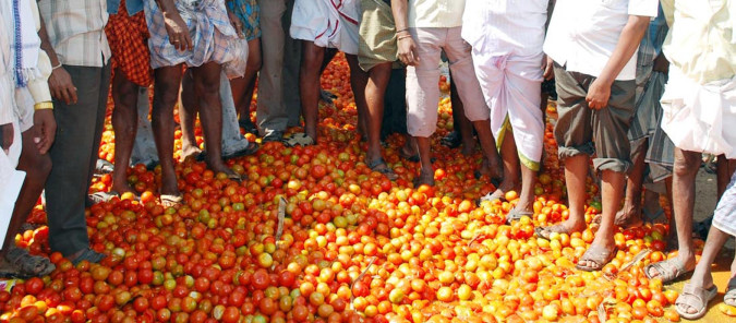 farmers trampling down tomatoes