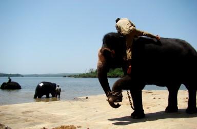 Sakrebailu-elephant-camp-04