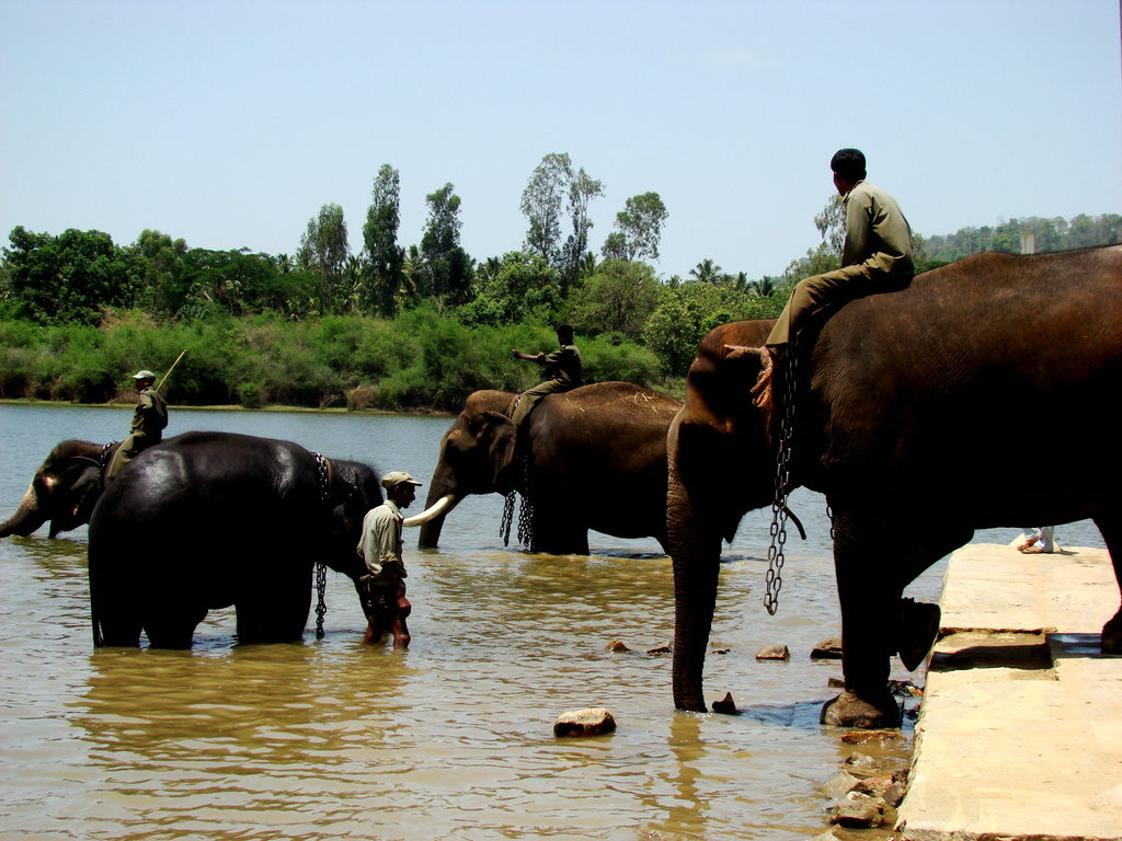 Sakrebailu-elephant-camp-05