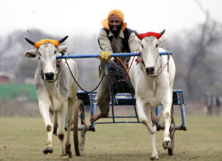 Cultural-Festivals-of-India-Kila-Raipur-Sports-Festival