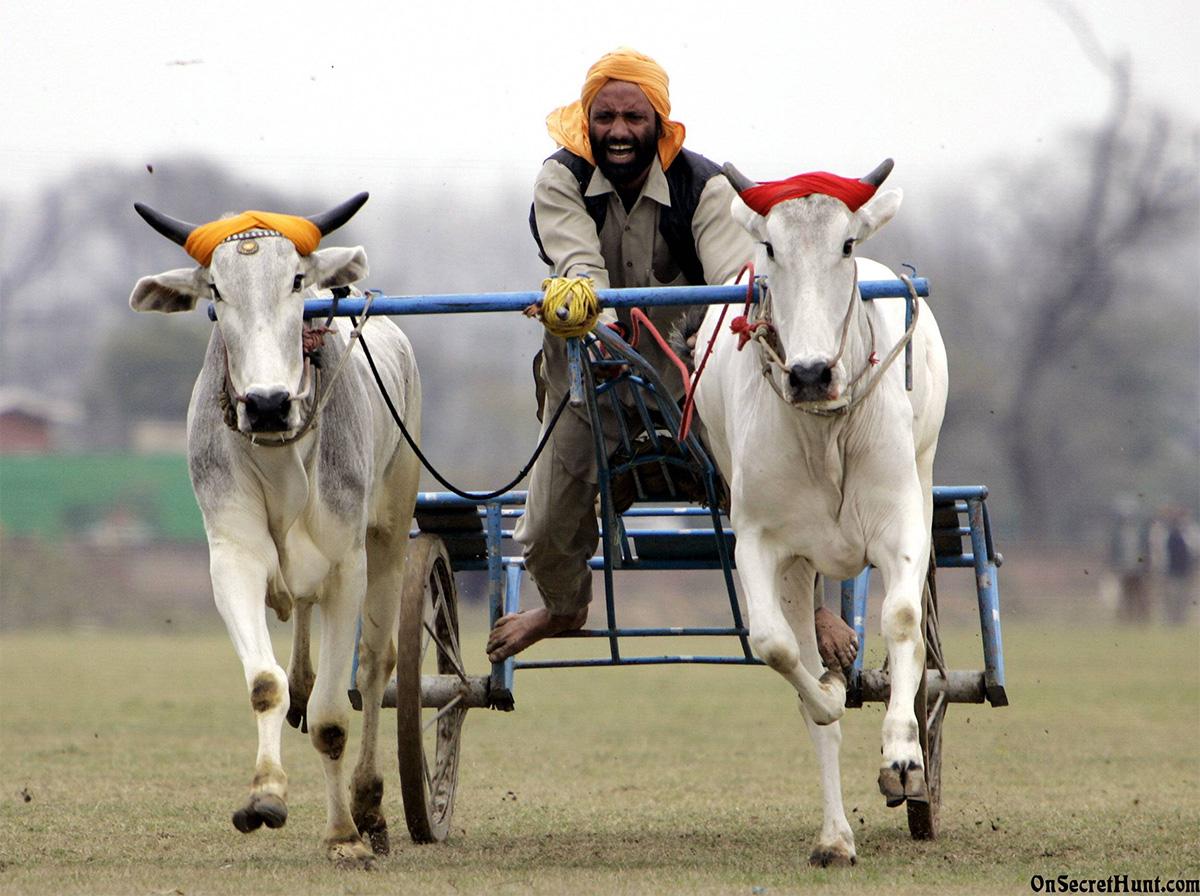 Cultural-Festivals-of-India-Kila-Raipur-Sports-Festival
