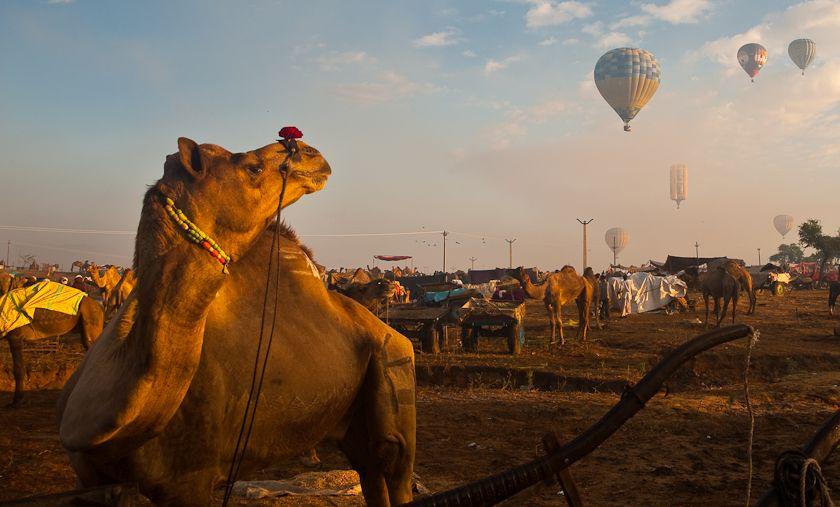 Pushkar Mela – Rajasthan