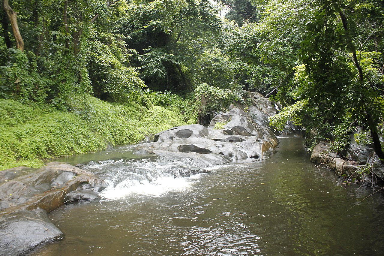 dhoni-falls