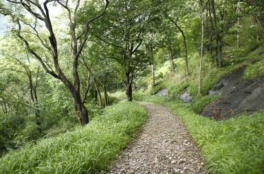 Road-to-dhoni-falls