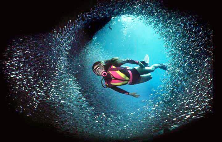 Scuba diving at lakshadweep