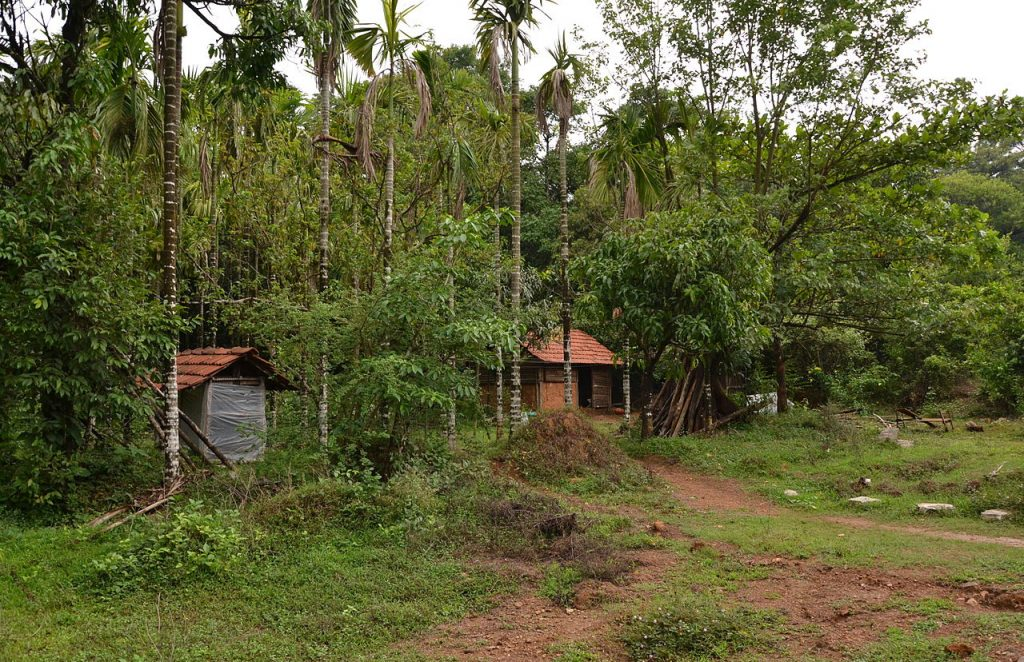 Voluntouring in India-Agumbe-Rainforest-Research-Centre