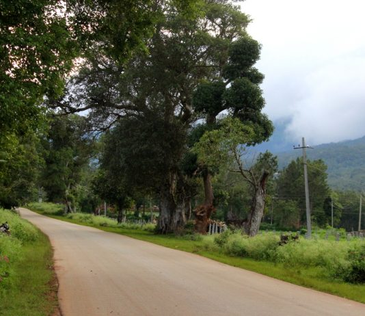 Coffee-Country-Chickmagalur-Road