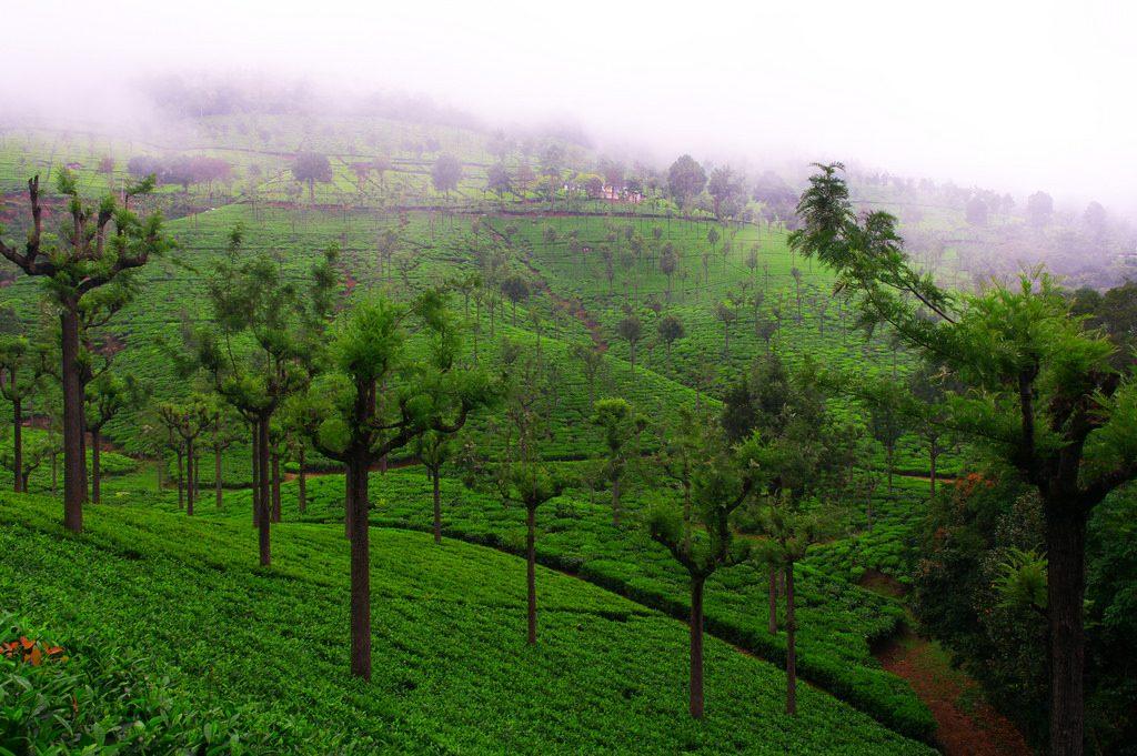 Coonoor Tamil Nadu