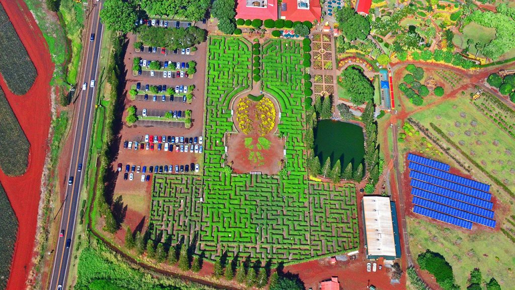 Top-Offbeat-Spots-in-Hawaii-Pineapple-Maze