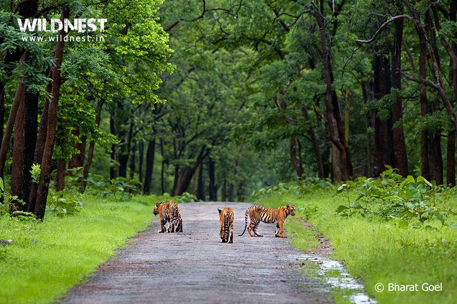 Destinations-to-Visit-in-Maharashtra-Tadoba-Andhari-Tiger-Reserve