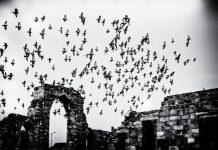 Qutab Minar Photo Feature-01