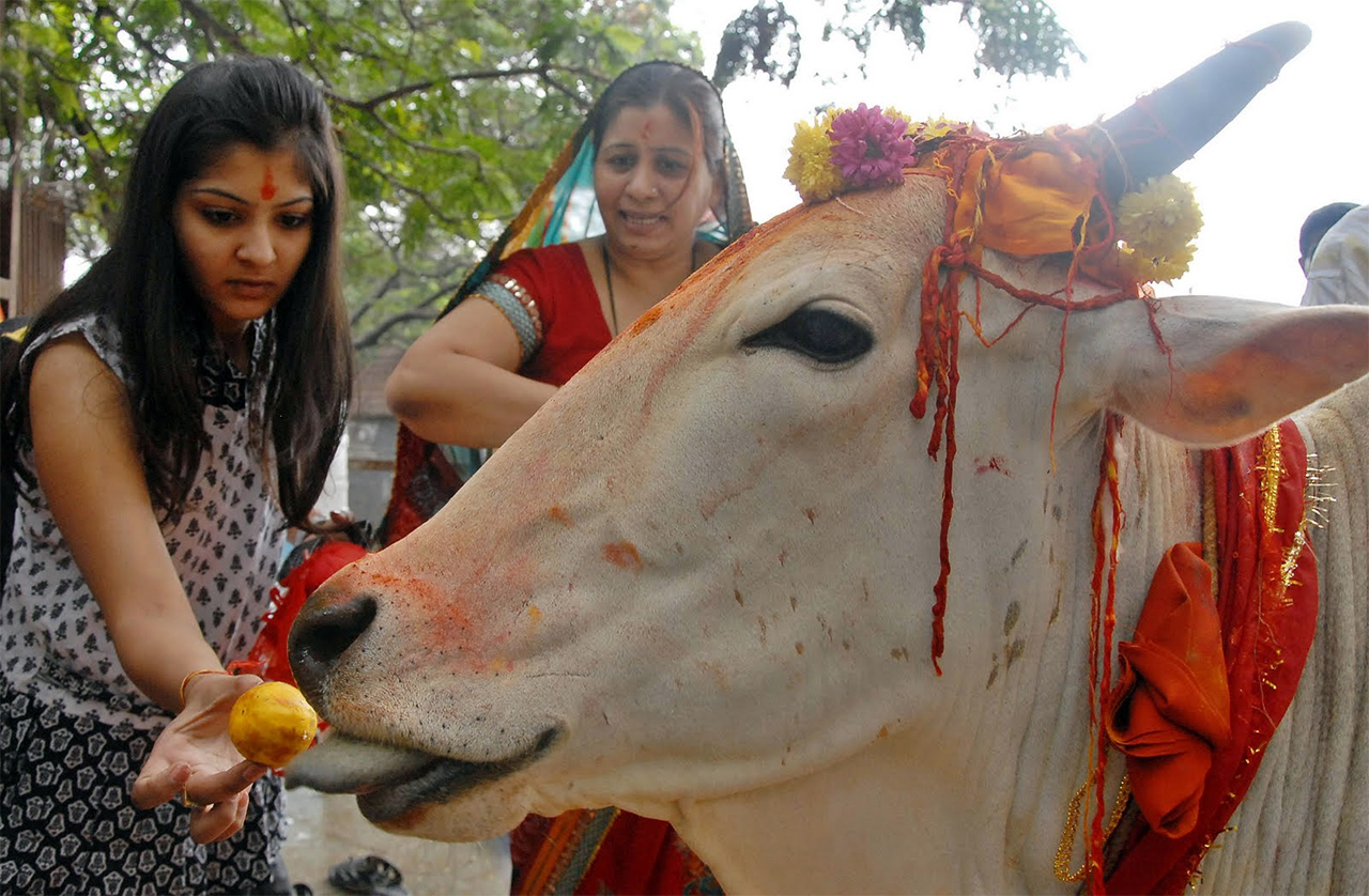 Cultures-of-India-Cow-Worship