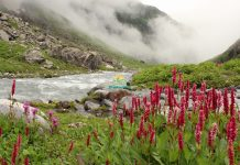 Hampta-Pass-Trek-4
