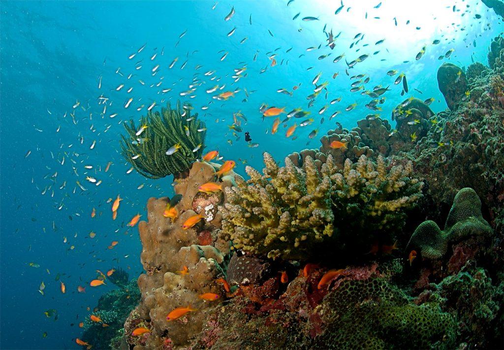 North-Bay-Island-Andaman