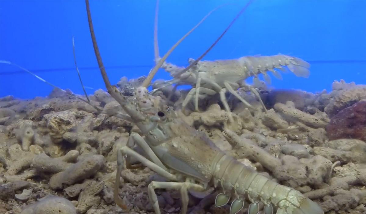 Sea World Aquarium in Rameshwaram