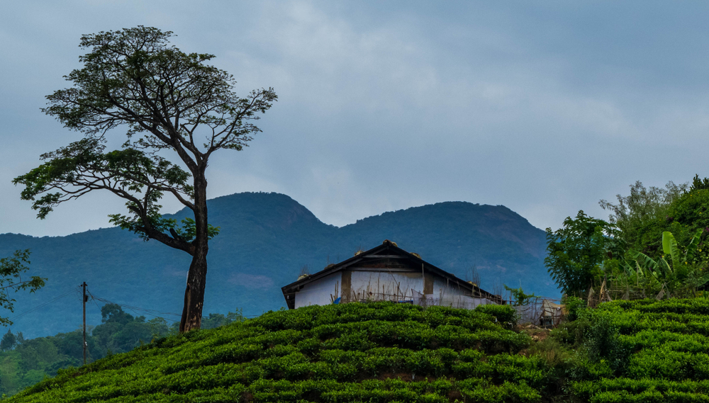 Place in Wayanad