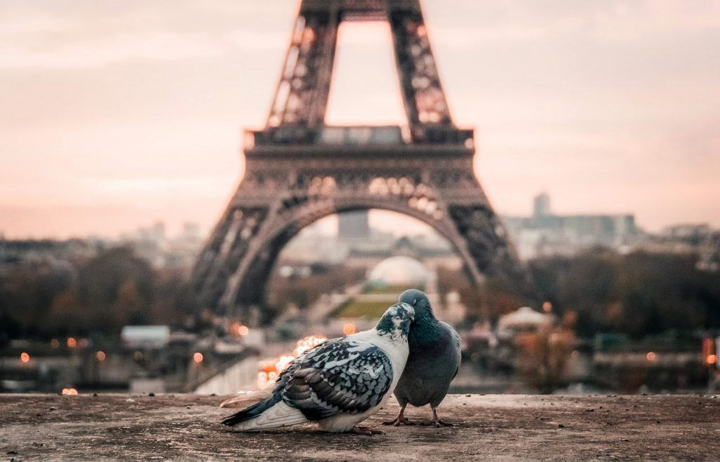 Couples Visiting Paris