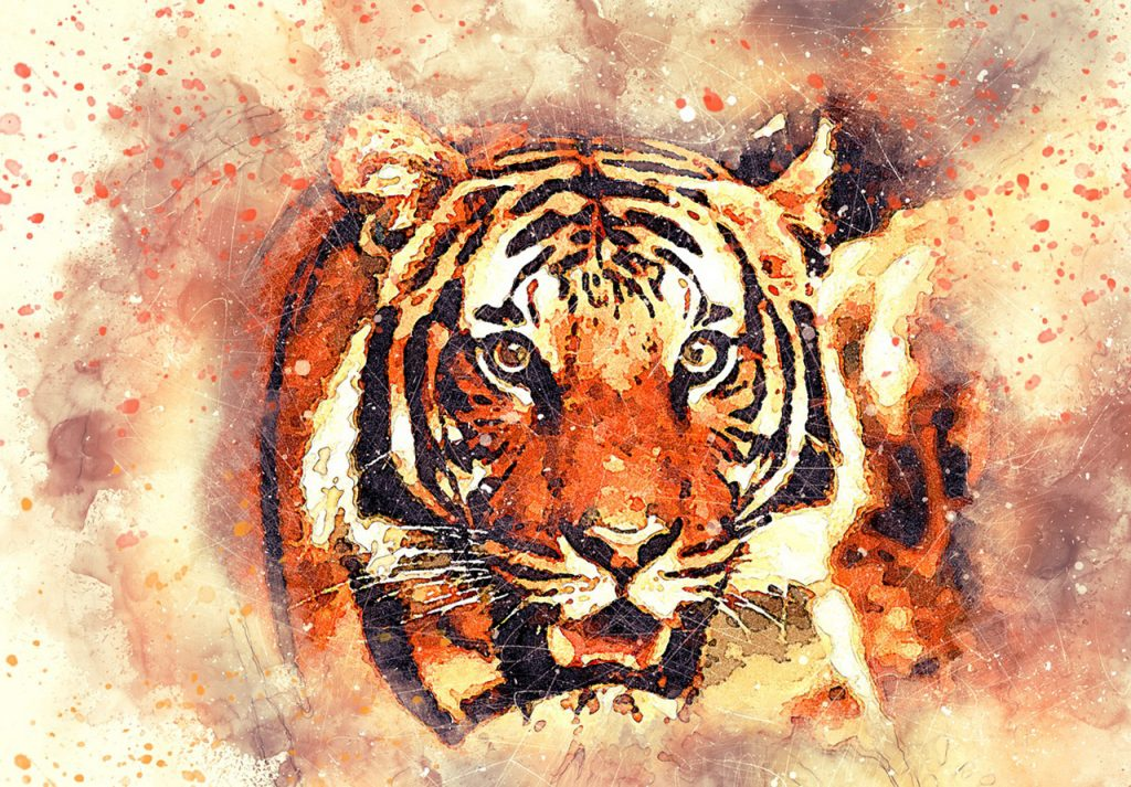 Tigers - The National Animal of India