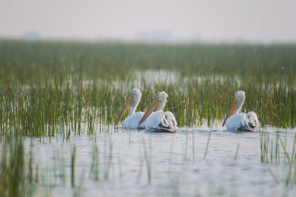 Migratory-Birding-Destinations-in-India Nal Sarovar Bird Sanctuary