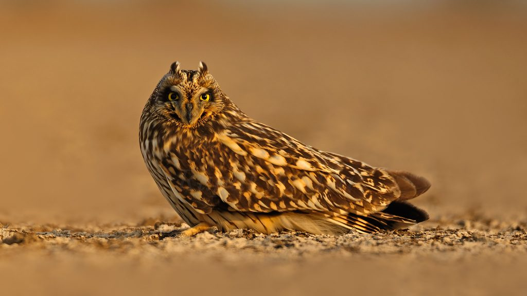 Migratory-Birding-Destinations-in-India Rann of Kutch and the Desert National Park