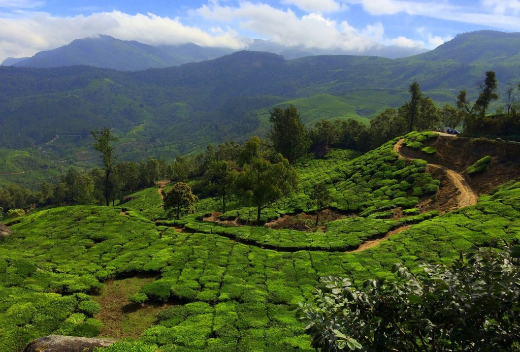 Most-Beautiful-Honeymoon-Places-in-India-Munnar
