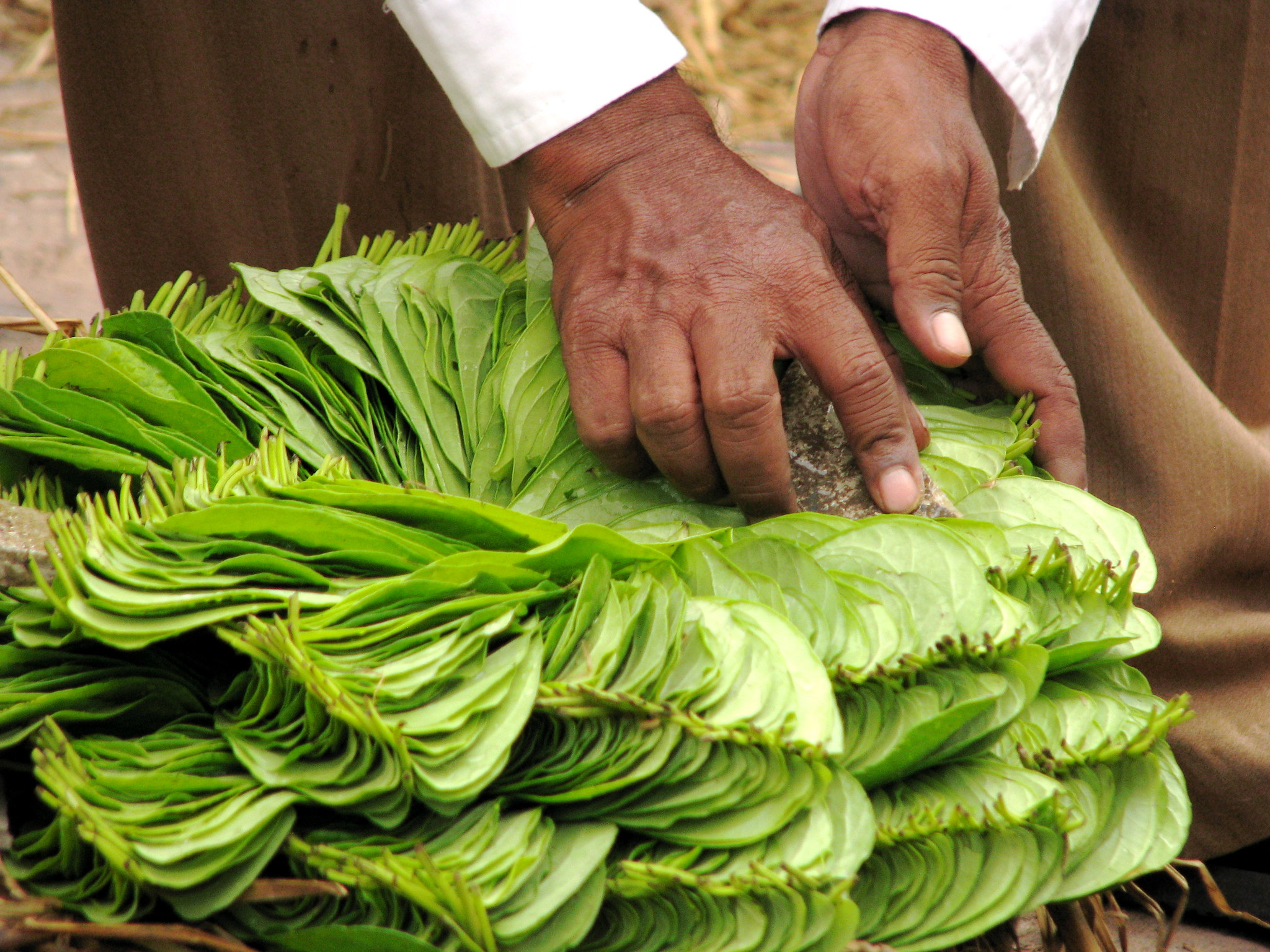 Medicinal uses of Paan